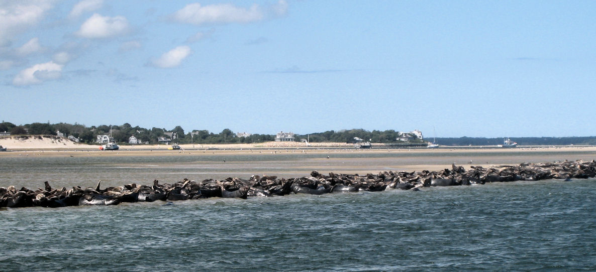 Chatham water tours seal tours and private boat charters for Cape cod fishing party boats